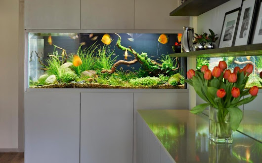 Splash the cash: interior water features to brighten up your home