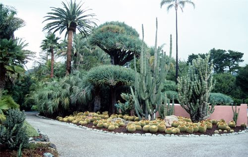 Landscaping with Succulents - Landscaping Network