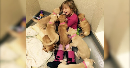 Little Girl Volunteers At Animal Shelter, Attracts All The Puppies - The Dodo