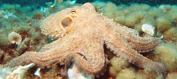Google, an octopus?