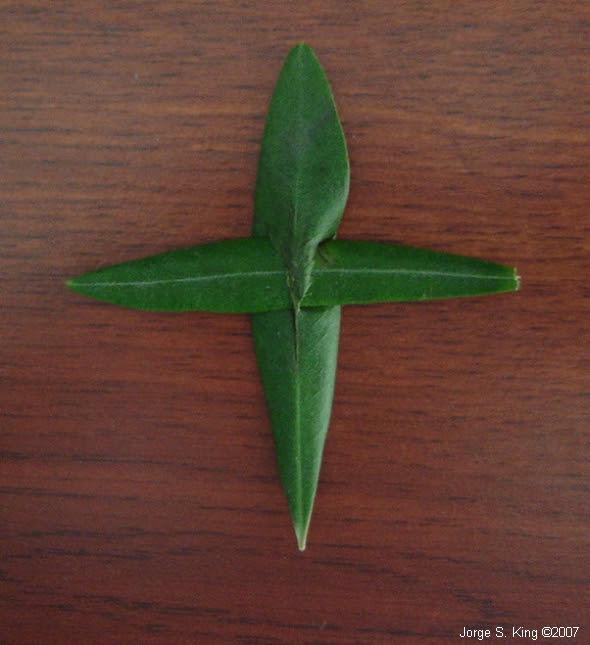 Cruces de olivos