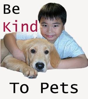 Be Kind To Pets - Singapore