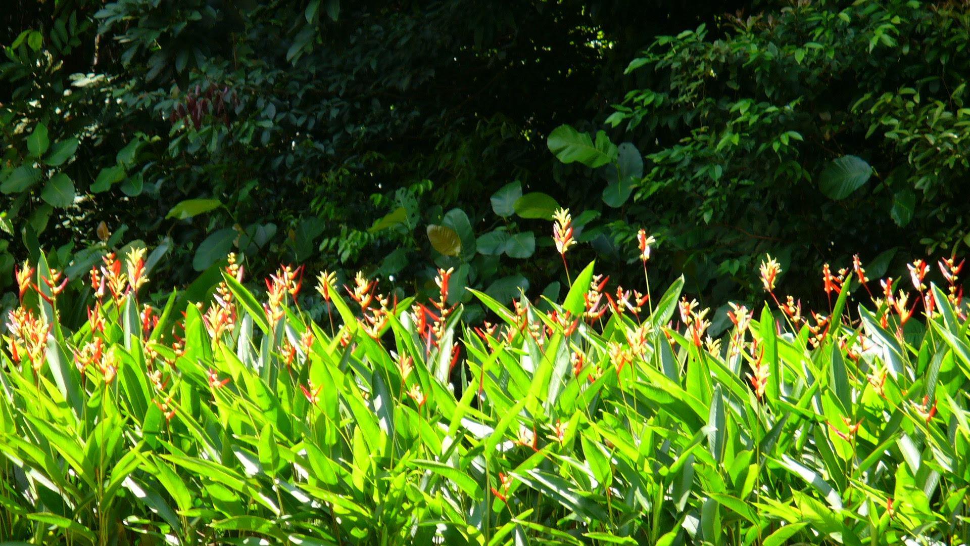 Flowers in Bloom - Singapore Botanic Gardens