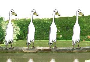 countable ducks
