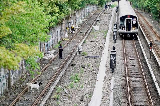 Un par de cabras son rescatadas por el comediante Jon Stewart en las vías del metro de New York