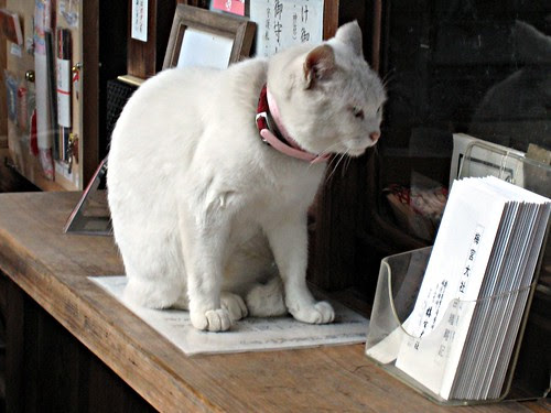 Shinto cat - Umemiya Jinja by Ganjin
