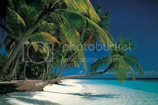 Tropical Beach Pictures, Images and Photos