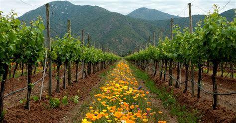 Best Time to Visit Emiliana Organic Vineyard   Natura Wines