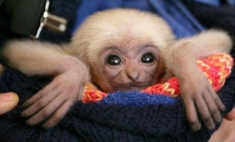 Baby Animals 18 Cute Baby Animals