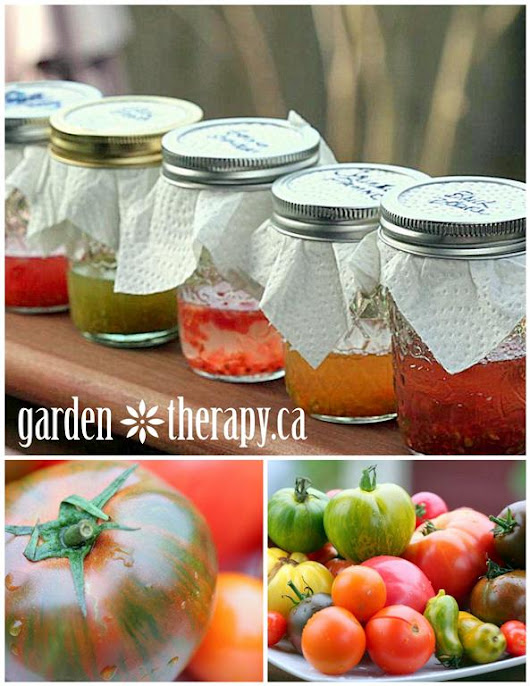 Saving Heirloom Tomato Seeds - Garden Therapy