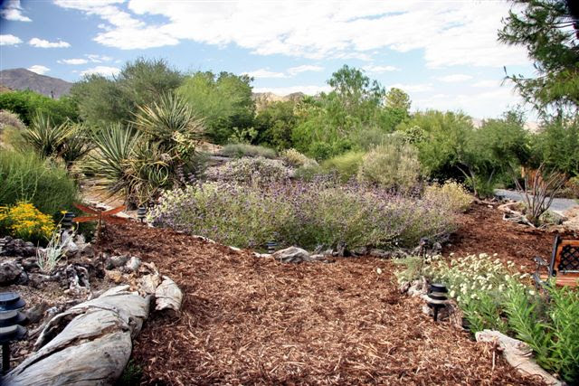 Create A Beautiful Drought Resistant Front Yard