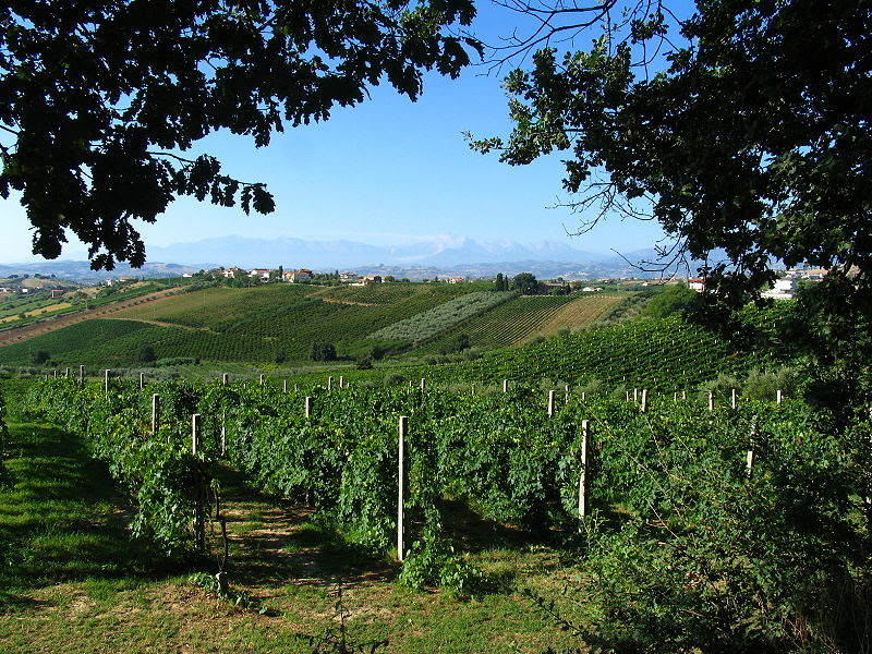 File:Uva, Olivetrees, Oaks, Vineyards.jpg