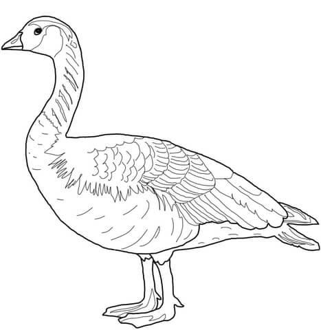 Canada Wild Goose coloring page | Free Printable Coloring ...
