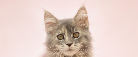cibi per gatti evitare