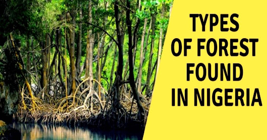 How many types of forests are there in Nigeria?