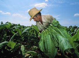 farmer-in-field-iedisc-montage