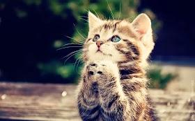 Wallpaper Anak Kucing Lucu Hd