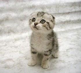 Kucing Lucu Dijual
