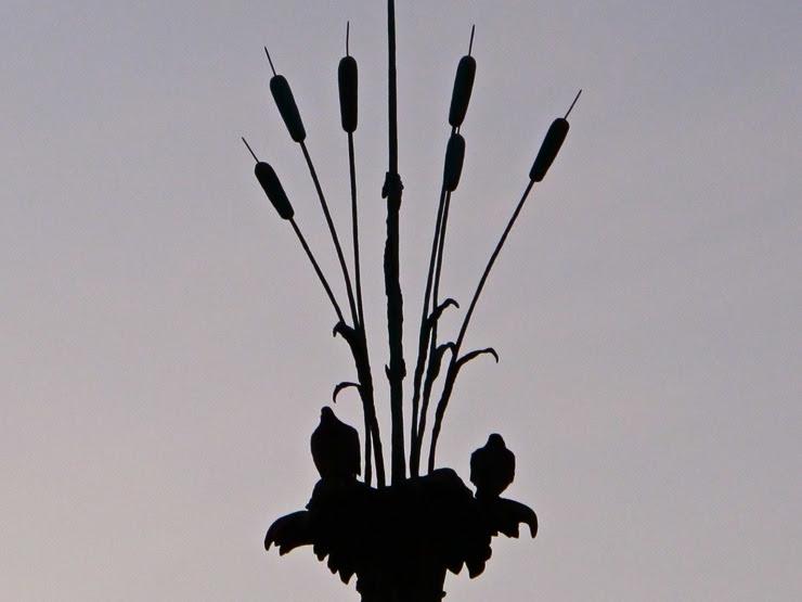 Pidgeons with delusions of grandeur