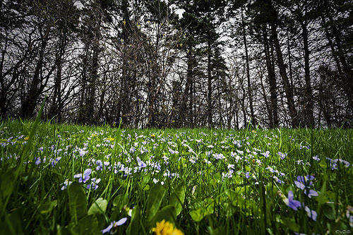 Ground View of Spring