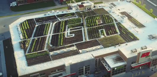 A 25,000 sq. feet rooftop garden makes IGA in Canada King of Green - Finally Good News