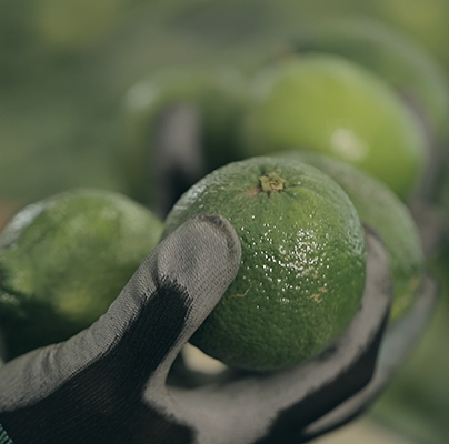 Inverafrut | Mexican Lime Imports | Allfresch Group Ltd | Allfresch