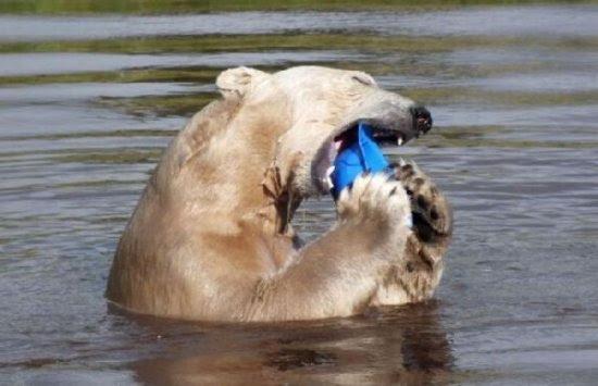 Όταν μια αρκούδα διασκεδάζει (10pics)