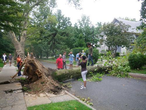 Tree down 17th st 1