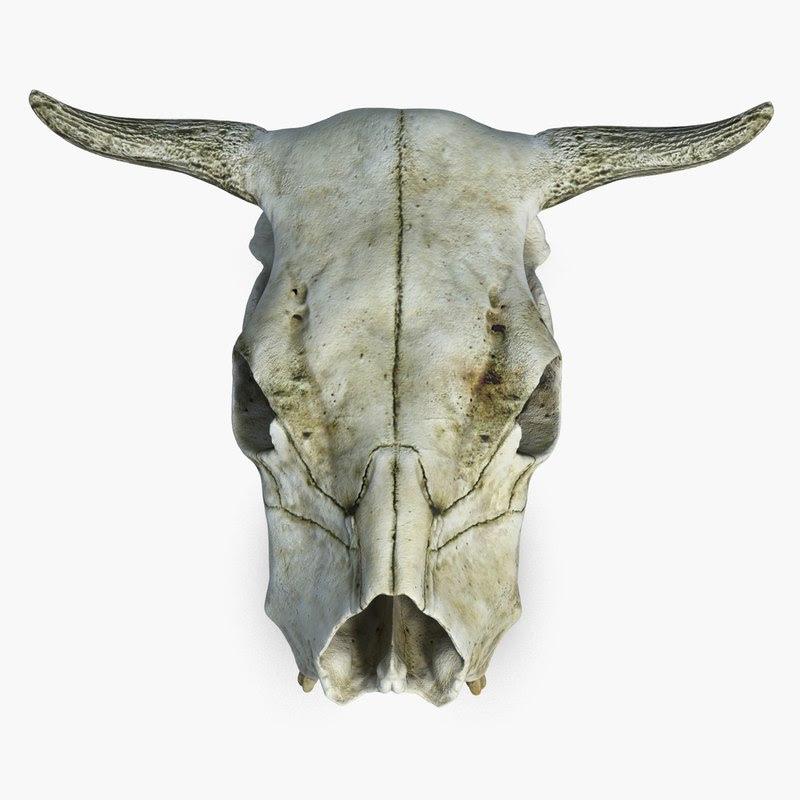 Download cow skull 3d model
