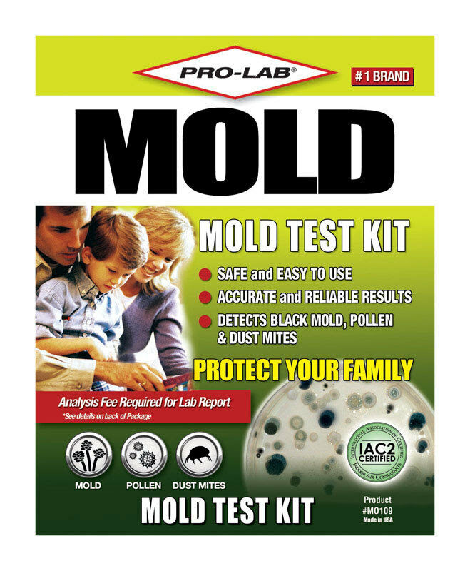 Detecting Mold In Your Home – Jerusalem House