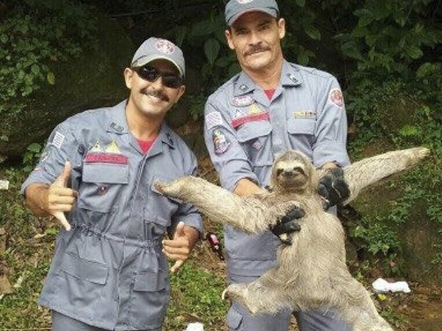 Bombeiros resgatam bicho-preguiça em uma pousada em São Sebastião (Foto: Divulgação/ Corpo de Bombeiros)
