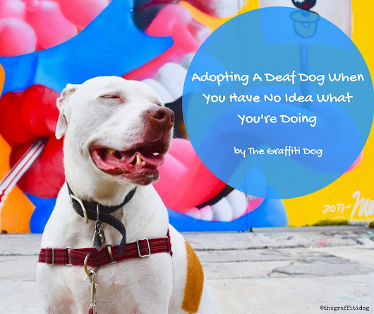 Adopting A Deaf Dog When You Have No Idea What We Were Doing