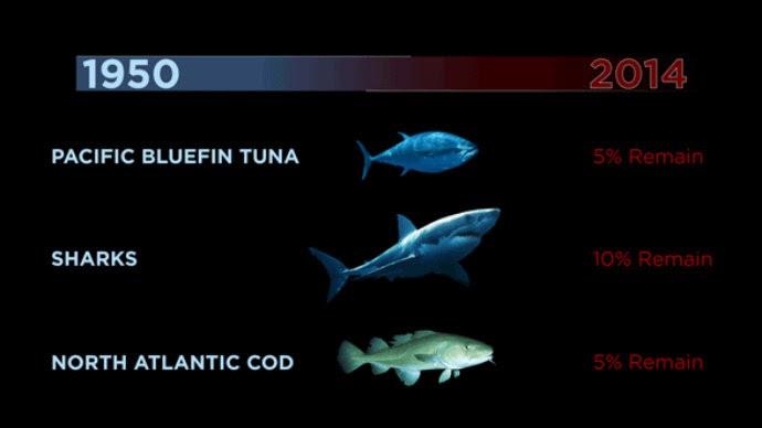 Oceanos sofreram muito nos últimos 50 anos (Foto: Reprodução)