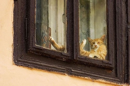 ??????, ????????, animal, animals, cat, cats, color, cute, fauna, fun, funny, kittens, kitty, lazy, photography, photos, relax, sleep, sweet, window, windows, yooxie