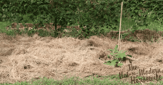 No-Till Low-Maintenance Gardening - The Not So Modern Housewife