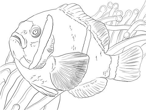 Barrier Reef Anemonefish coloring page | Free Printable ...