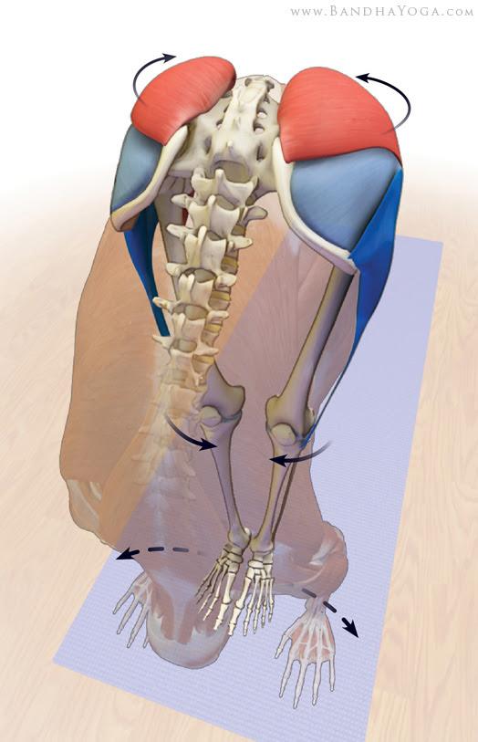 gluteus medius and tensor fascia lata in uttanasana