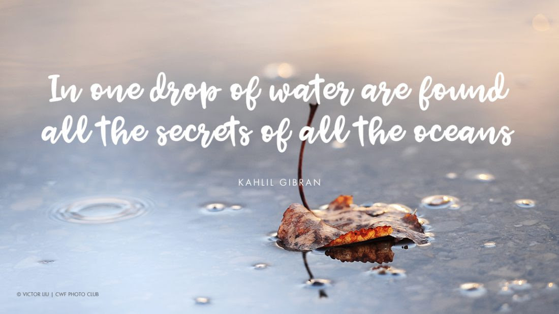 8 Quotes That Illustrate Why Water Is Life