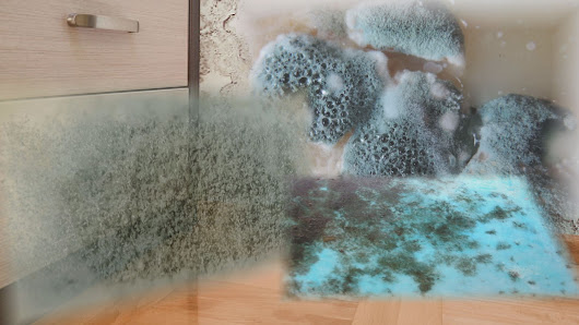 The Formula That Leads To Mold In Your Home And How To Keep It Out