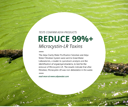 Adya Products Reduce More Than 99% of Microcystin-LR (Toxic Algae)