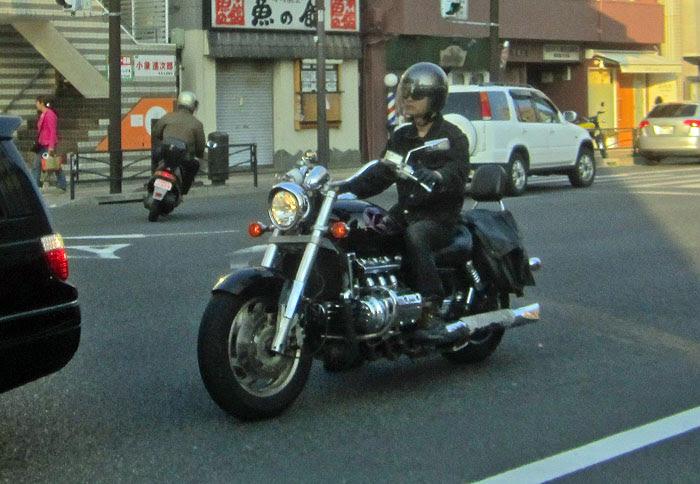 Japanese Hog
