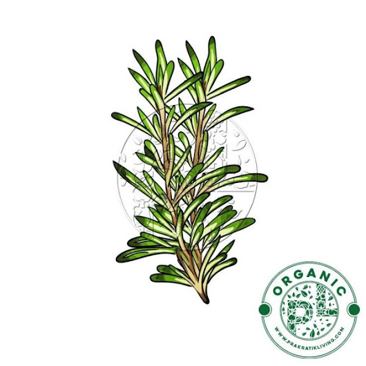 Rosemary for Diabetes