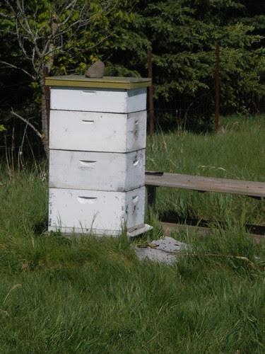 Beehive 2