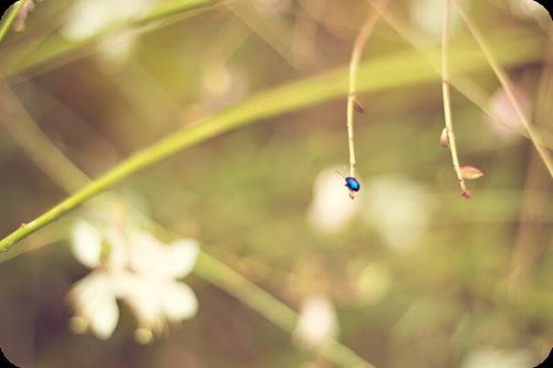 Beetle bright