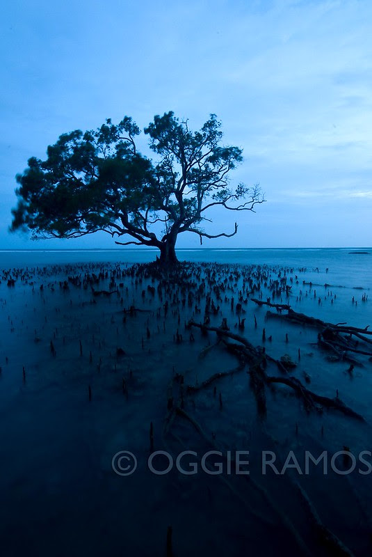 Guimaras Costa Aguada Sunset Mangrove