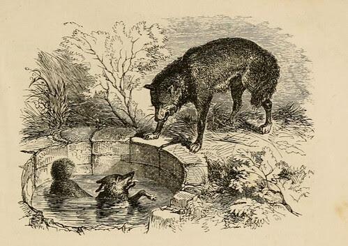 Vulpes in Puteo et Lupus