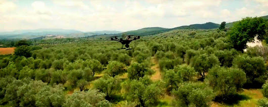 Project Uses Drones to Scan the Needs of Every Tree