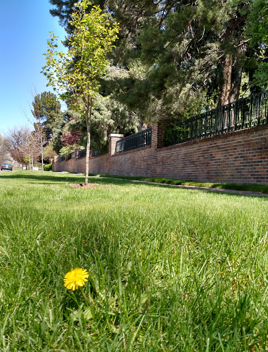 Weed And Feed For Lawns – 5 Reasons Not To Use It! | Mountain High Tree