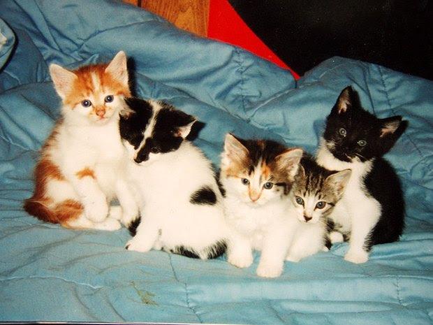Tratamiendo para pulgas en gatitos