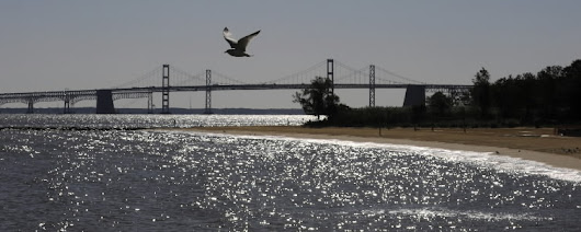 Bay acidification requires immediate action [Commentary]